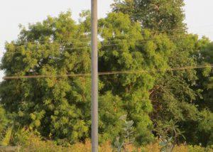 Solar Green Blinker Lights